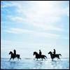 horses by enriana