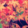autumn momiji by jiatra
