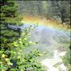 rainbow flowers by jiatra