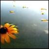 flower in pond