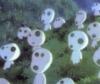 anime-kodama treetop