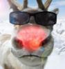 belfast_caribou userpic