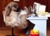grey_rabbit2