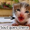 soul kitten