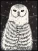owl i gave was me