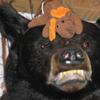 Bear & Moose