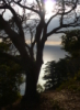 Deborah P Kolodji: TreeSunset
