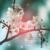 flowers // そう、もうすぐ春だね