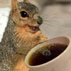 coffee, squirrel, coffeesquirrel