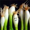 KQ veggies