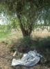 дерево и ткань