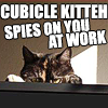 Cat | Cubicle | Spies on you at Work