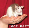 Got Rat