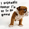 Miss Sophia: I solemnly swear... - bulldog