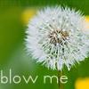 Blow me (dandelion)