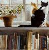 cats on bookshelf