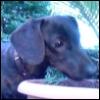 jem_dachshund userpic