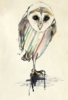 bird, kareenazerefos, owl