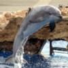 dolphinleap