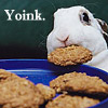 ms_rabbit_head userpic