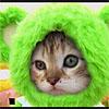 aphex cat