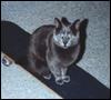sk8ercat userpic