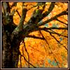 autumnlimbo userpic