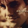 Antenna: Xander animal