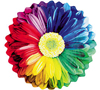 Beth H: Misc Rainbow Flower (bbb)