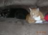 banditdacatsmom userpic