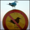 rules are for the birds