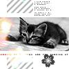 Sapph: Kitten