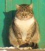 Лошицкий кот