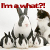 Gypsyluv: bunny I'm a What?