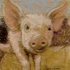 housepiglet userpic