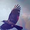 corvusvolant userpic