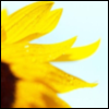acidicstar userpic