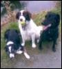 zoolady: 3 dogs