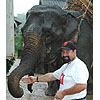 How Elephant