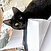 lily- study bubby