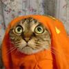 Вера: Кот в капюшоне