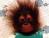 bebopmonkey userpic