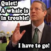 al gore whale in trouble