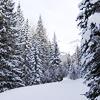 just......me: holidays & seasons   trees