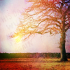 purgadise userpic