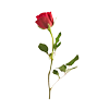 But for me, it was Tuesday.: Stock - red rose