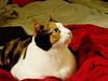 wonderwombat userpic