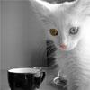 murlyska userpic