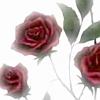 Cimeara: roses