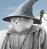 Cats Gandalf the grey and white
